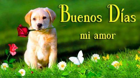 82 Imagenes Y Frases Gratis De Buenos Dias Imagenes Gratis